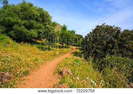 Path in the green