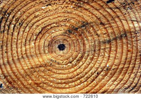 Pine Rings