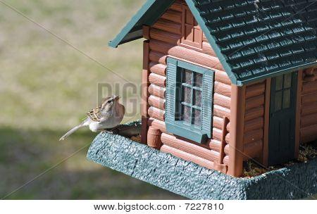 Chipping Sparrow (spizella Passerina)  On Birdfeeder