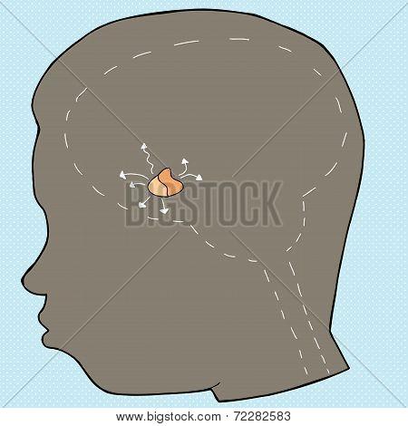 Pituitary Gland Diagram