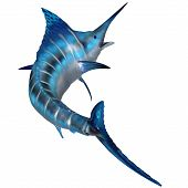 The Blue Marlin is a predator and a favorite game fish of deep sea anglers. poster