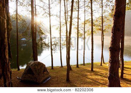 Pang Tong Under Royal Forest Park