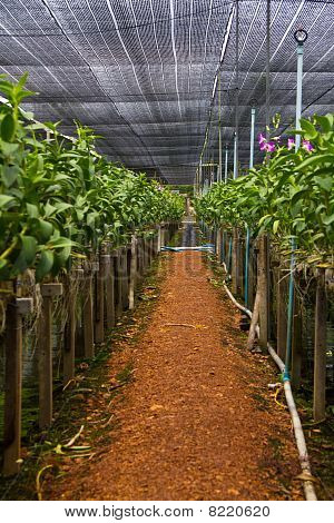 footpath in plant orchid thai farm nature poster