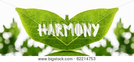 Artistic mirrored symmetrical fresh green leaves with the word - Harmony - painted in white showing the texture and pattern of the veins in an ecological concept