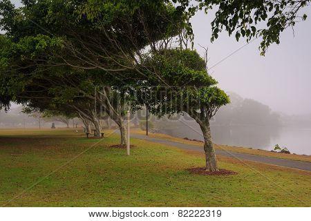 Foggy Morning Along Evandale Lake