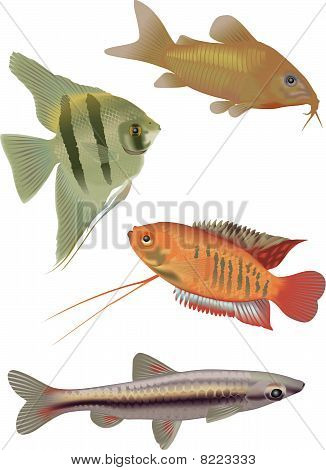 4 Tropical Fish.