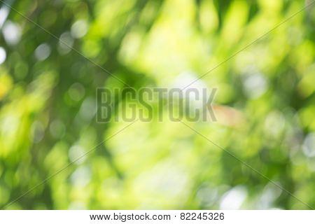 Blurred Tree
