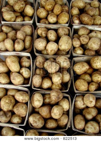 Potatoes 310