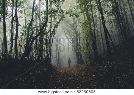Man walking in dark fantasy forest