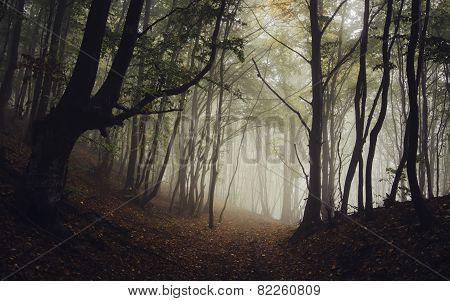 Path trough dark forest with fog in autumn