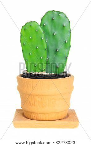 Cactus ( Opuntia ) On Isolated Background ( Cereus Hexagonus Mill )