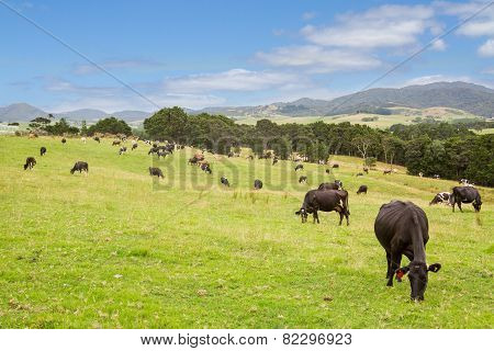 Green Grass Cows