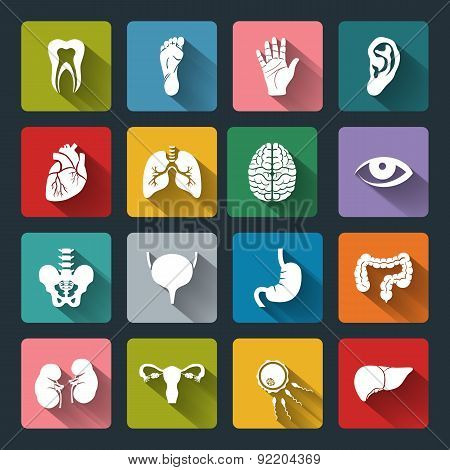 Set Of Vector Medical Icons With Human Organs In Flat Style