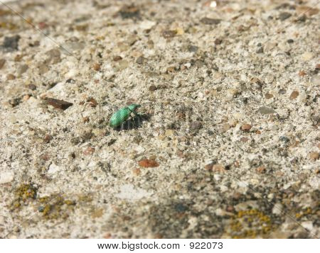 A Pattern With A Tiny Green Bug
