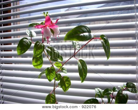 An Office Plant