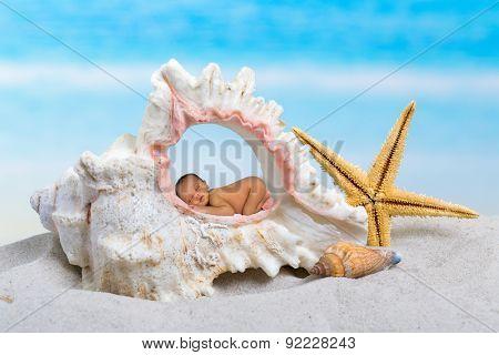 Newborn baby sleeping inside a seashell on a beach