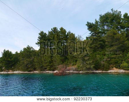 The flora with the Aleppo spruce fir trees and the Marquis or macchia shrubland of the Lovisce bay of the Croatian island Scedro in the Adriatic sea poster