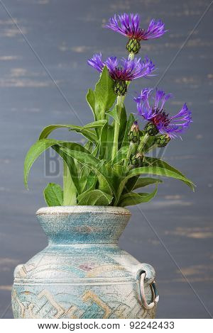 Cornflower (centaurea cyanus) in the blue vase against the blue background.