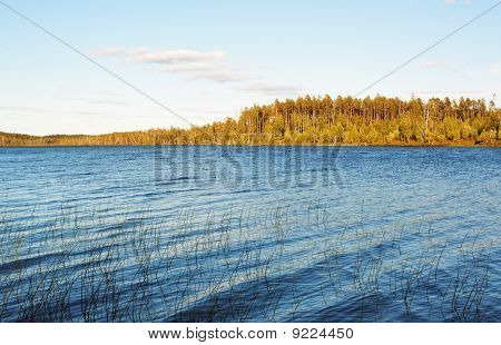 Green Reed On Blue Lake
