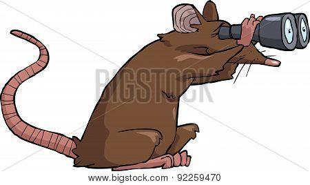 Rat Looking