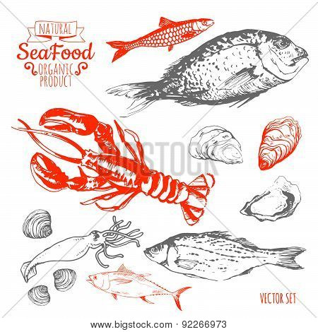 Vector Illustration On White Background. Hand Drawing Set Of Seafood.