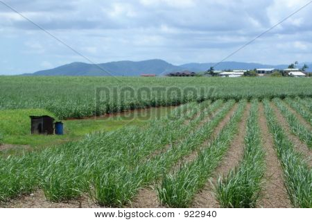 Queensland Sugar Cane Farm