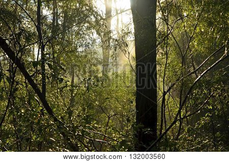 Sunlight filtering through a misty forest scene after the rain