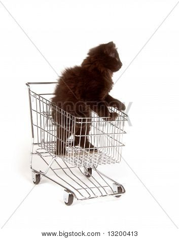 Cute black kitten standing in shopping cart on white background poster