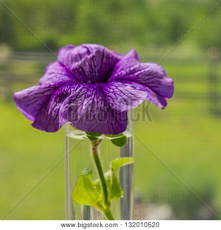 lilac flower in a vase against a window