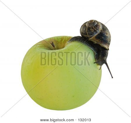 poster of a snail crawling over a green apple - some  visible grain at full size