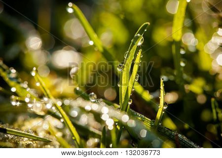 Closeup Of Waterdrops