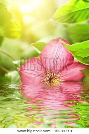 Pink flower reflected in rendered water