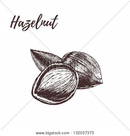 Hazelnut. Hazelnut in hand-drawn style. Hazelnut Vector illustration. Hazelnut with leaves. Hazelnut in vintage style.