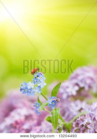 Small ladybug sitting on a field flowers poster