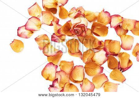 White surface covered with pink old dried rose petals and single bud as a romantic background composition