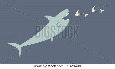 Shark5