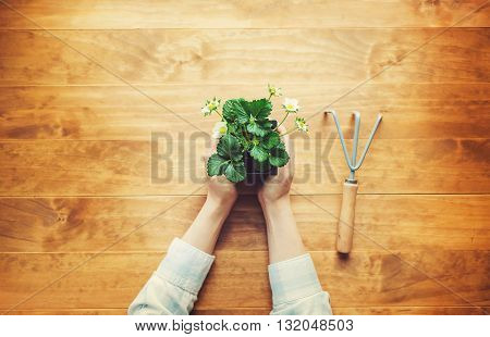 Person Holding A Strawberry Plant On A Rustic Table