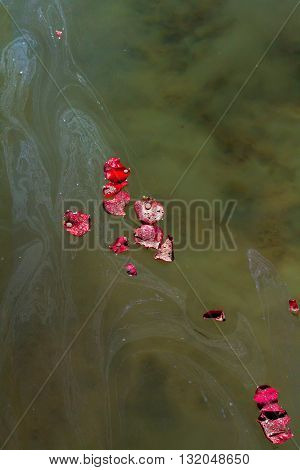 Rose petals with droplets of water and the ashes of a loved one float on and sink into the lake water they were scattered in causing the water to become murky.