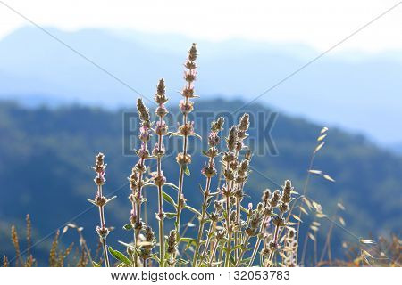 Nice summer flowers in mountains