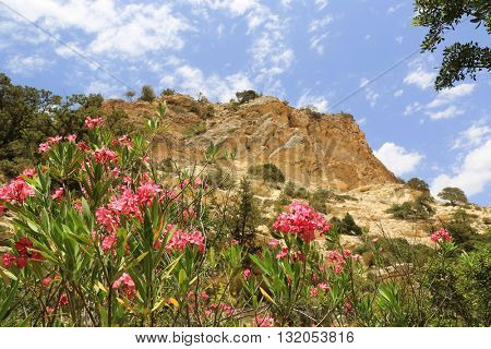 red wild flowers in mountains