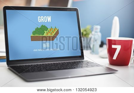 Grow Crop Cultivated Agricultural Nature Season Concept