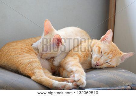 Cute thai kitten sucking milk in thailand