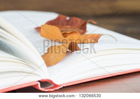 Close up of the open book with autumn leaves
