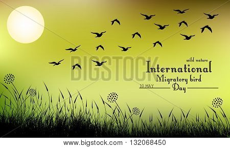Vector illustration of Field of grass and flying birds on night background