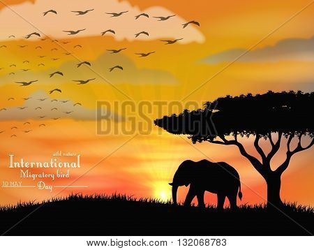 Vector illustration of African elephant with flying birds on sunset sky