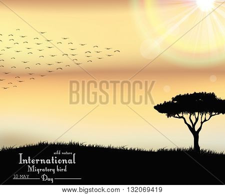 Vector illustration of Birds migratory day on sunset background