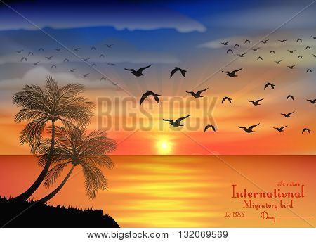 Vector illustration of Photo of sunset on ocean for birds migratory day