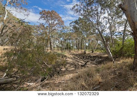 Very dried out area of the Mosquito Creek line at Naracoorte forest during Autumn in South Australia