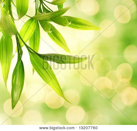 Bamboo leaves over abstract blurred background
