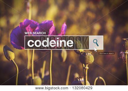 Codeine in internet browser search box opium poppy field in background